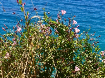 Pink glory against the sea