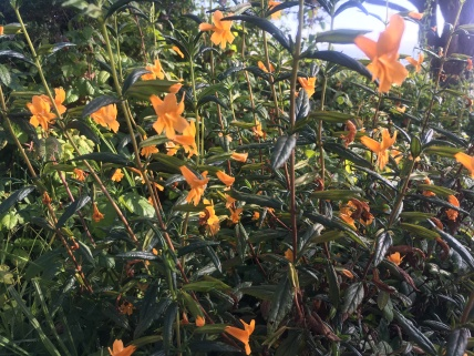 Wildflower amongst the poison oak