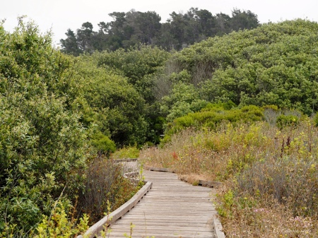 The boardwalk that leads to a moderate hike around the state park.