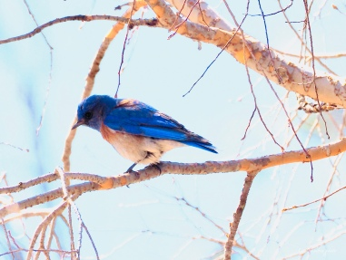 A visit from the bluebird of happiness while we picnicked