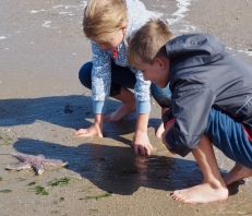 Seastar discovery in the tide pools